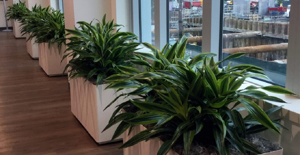 Plantwerks Interior Landscaping Bringing The Beauty Of Nature Indoors